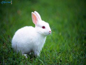 صور ورمزيات أرانب تحفة